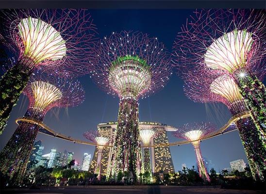 جنگل بوتیک تیماه سنگاپور