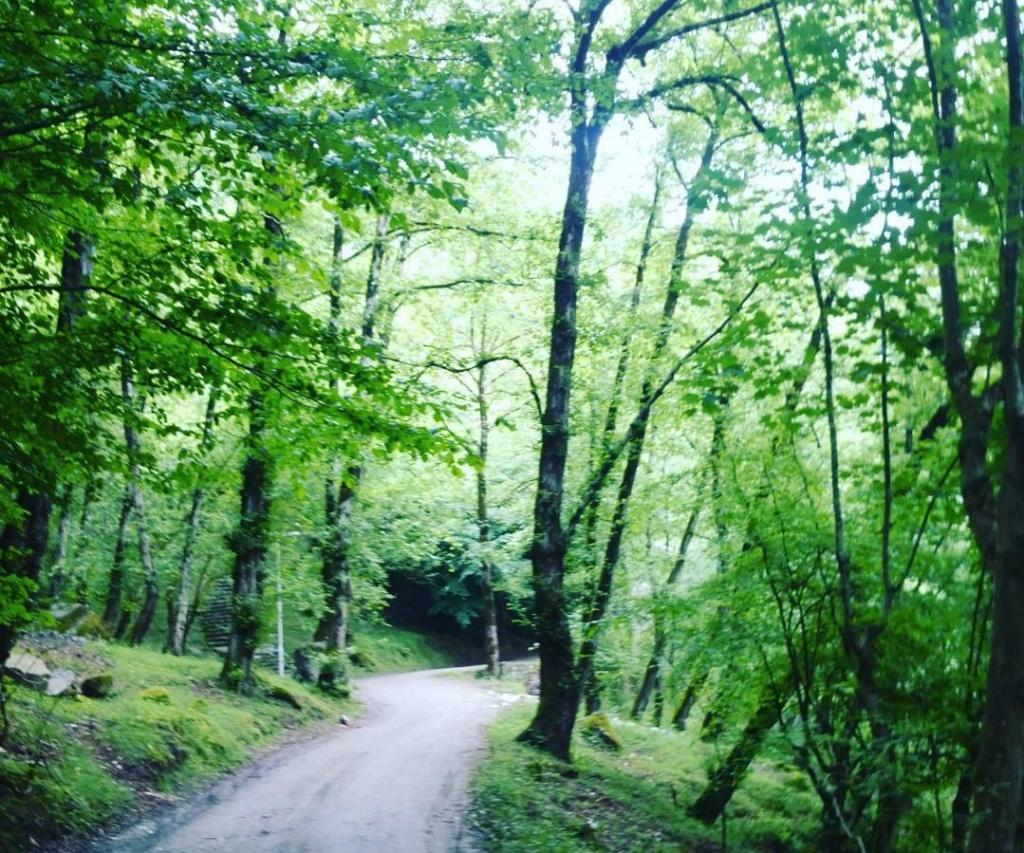 جنگل  صفارود